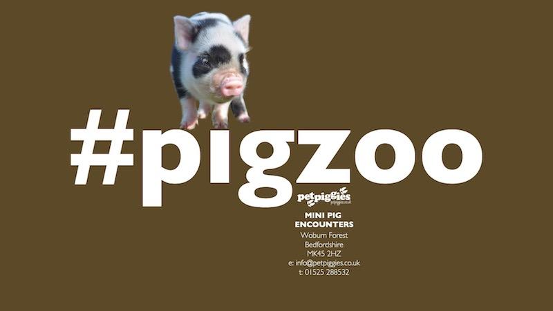 #pigzoo