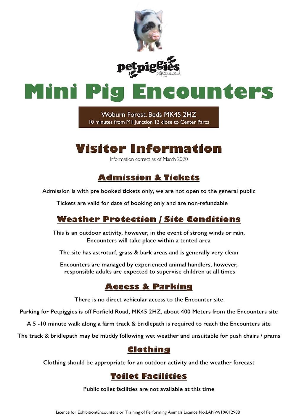 Petpiggies Mini Pig Encounters