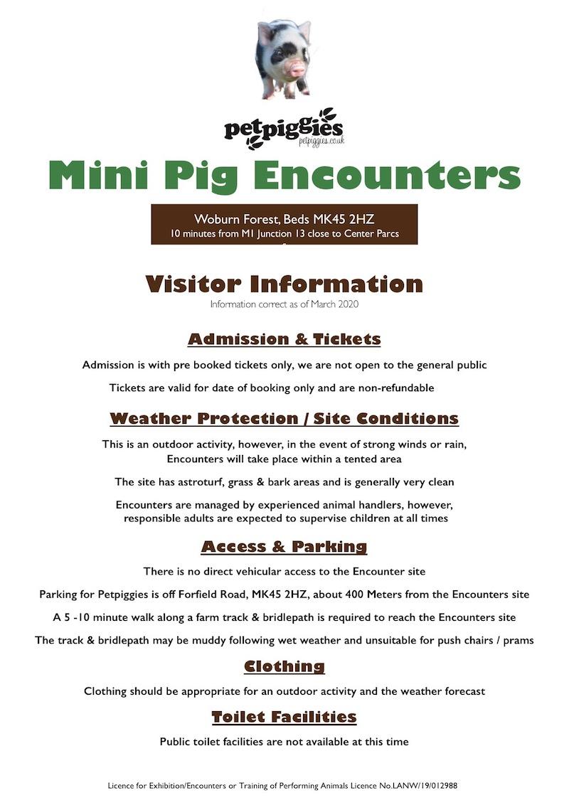 Petpiggies Mini Pig Encounters - General Information