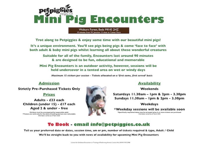 Petpiggies Mini Pig Encounters - Information