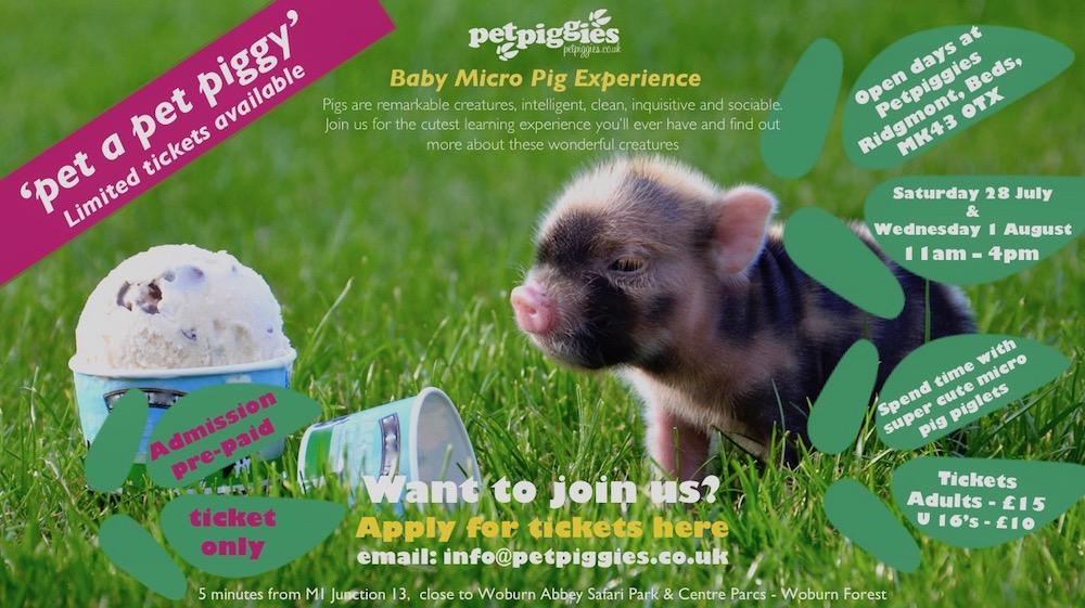 Micro Pig Open Days At Petpiggies