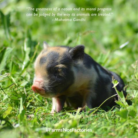 Visit http://farmsnotfactories.org/